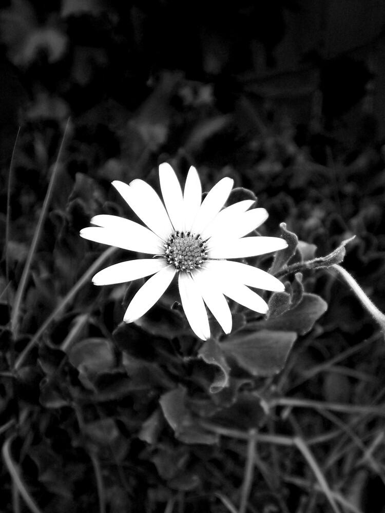 Flower by lovelydarl