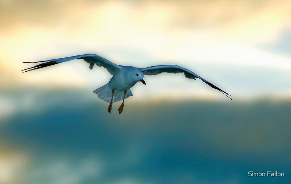 Gliding Gull by Simon Fallon