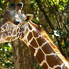 Giraffe by imagetj