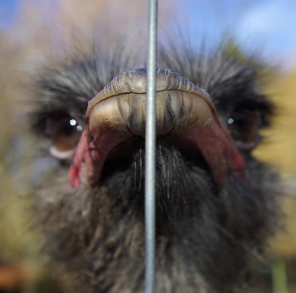 Ostrich 2 by Geoff46