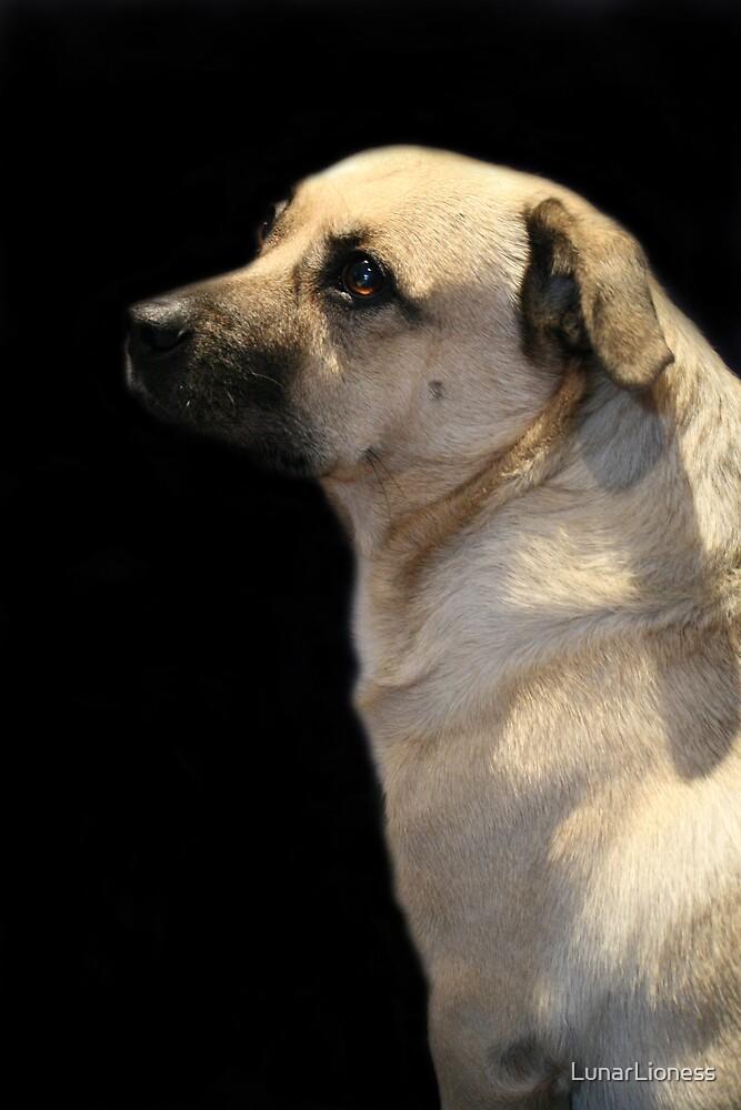 Dog Portrait by LunarLioness