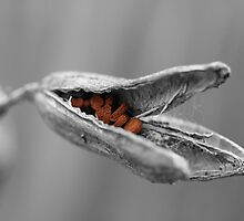 Seed Pod by LunarLioness