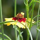 Yellow & Red by Martha Medford