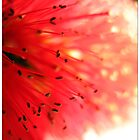 Electrigy Bottlebrush by Tracey White