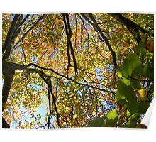 Scottish Autumn Poster