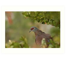 Red ring eyed dove Art Print