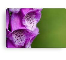 Digitalis Abstract Canvas Print