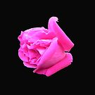 Pink Petals by Martha Medford