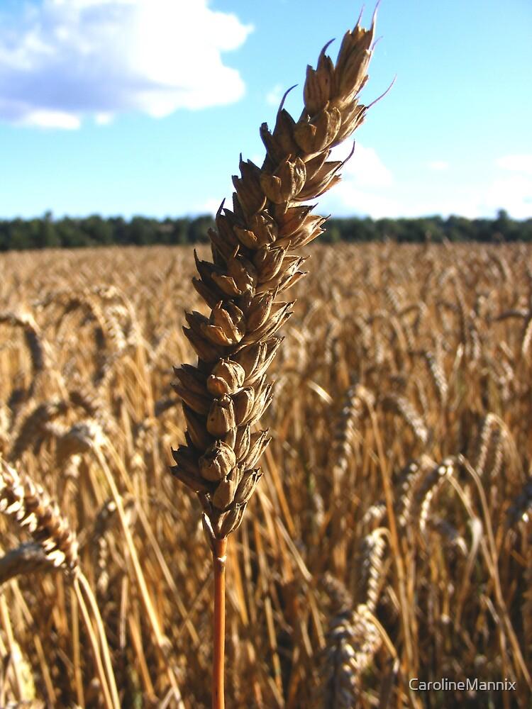 Wheat! by CarolineMannix