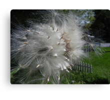 Thistle Seed Canvas Print