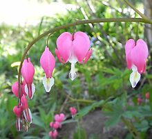 Bleeding Hearts by Martha Medford