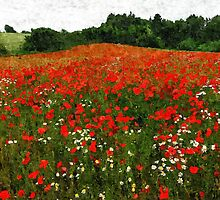 Field of poppies poppy flowers by Ron Zmiri