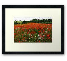 Field of poppies poppy flowers Framed Print