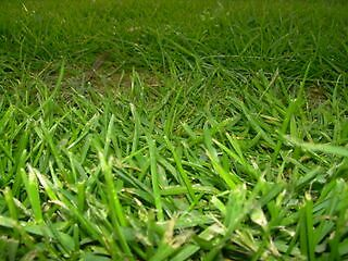 Grass by Awelker