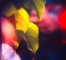 Lemon Tree Leaf by MoiMM