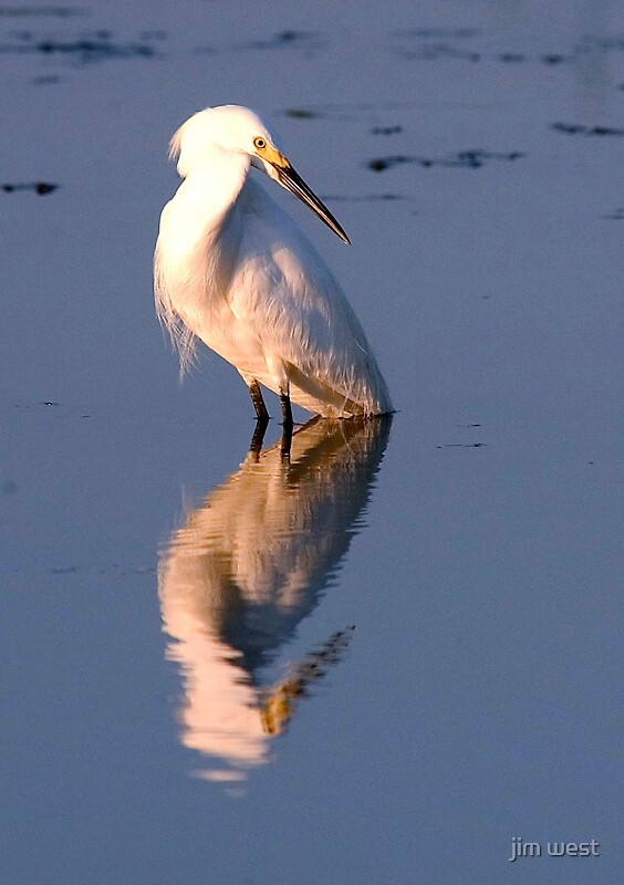 Egret by jim west