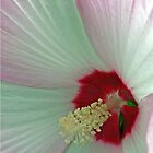 Pink And White Hibiscus Flower Macro by kkphoto1