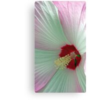 Pink And White Hibiscus Flower Macro Canvas Print