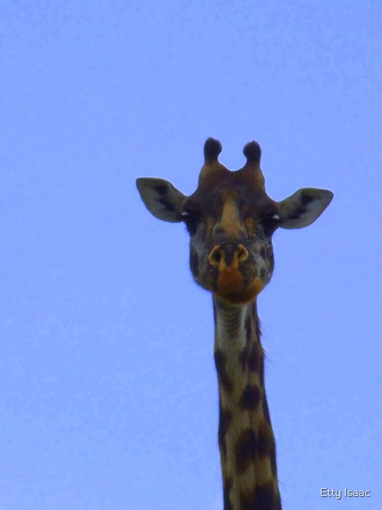 Yes. I am tall. by Etty Baruch