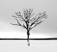 Winter by buko