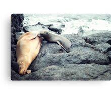 Nursing Sea Lion Canvas Print