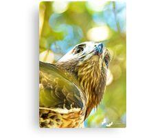 Red Tailed Hawk Closeup Metal Print
