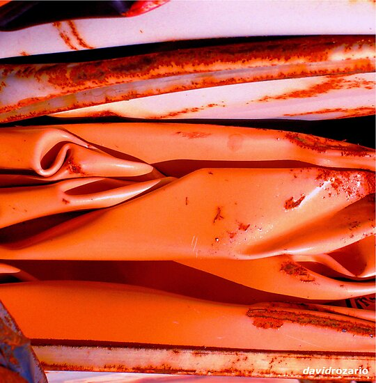 orange crush by David Rozario