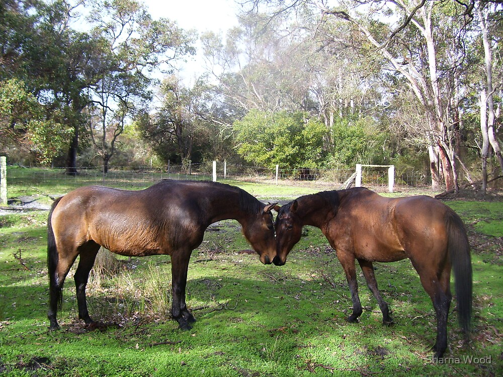 Bronty and Amigo by Sharna Wood