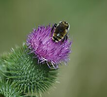 Busy Bee by Holly Werner