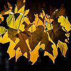 November Flames by Sue Morgan