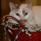 A basket full of cheer. by Alice Kahn
