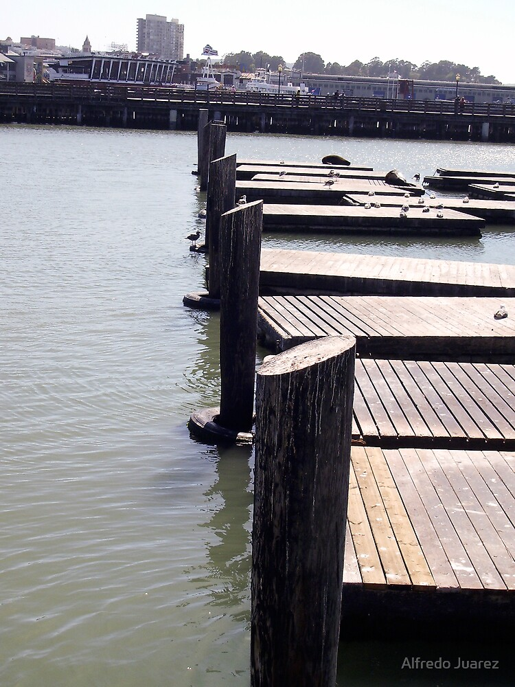 Seals at the SeaPort by Alfredo Juarez