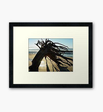 McEwens Beach sunrise Framed Print