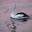 pelican by jack01