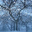 Winter Shimmers by reindeer