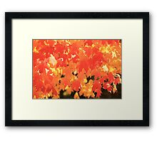 burning colors Framed Print