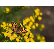 The Vivid Colors of Summer Photographic Print