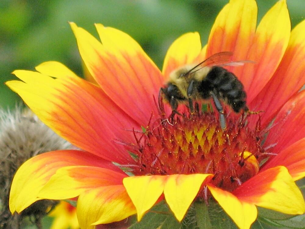Hunt for Honey by addamsbabygirl