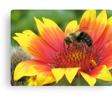 Hunt for Honey Canvas Print