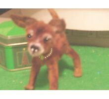 "chihauhau 3"" pup miniature faux fur little ""JOEY"" made for ebay Photographic Print"