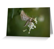 Free State Moth... South Africa Greeting Card