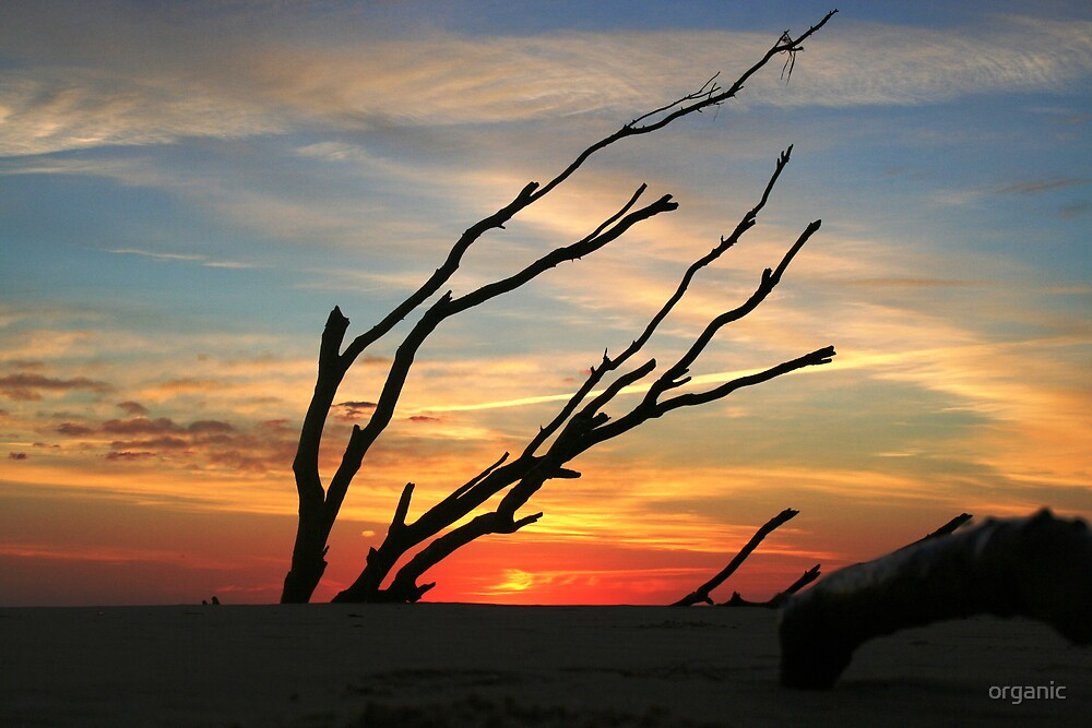 Sunrise/Sandbridge, Virginia  by organic