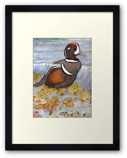 Harlequin Duck by Diane Hall
