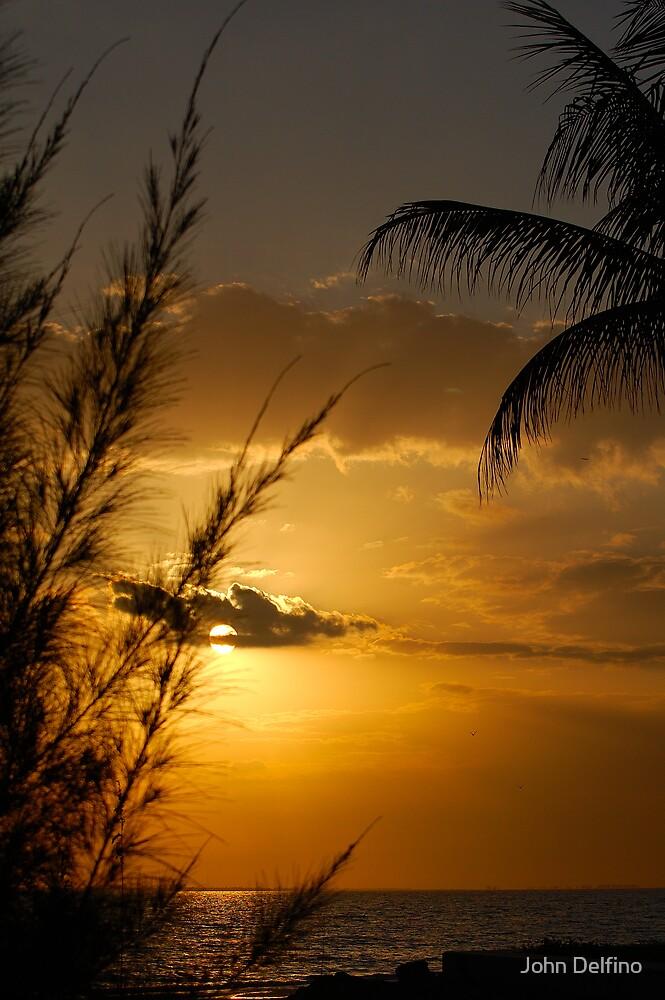 Pine and Palm Sunset by John Delfino