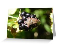Brown Marmorated Stink Bug Greeting Card