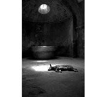 Sleeping Dog at Pompeii Photographic Print