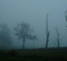 Foggy Morning Pipers Creek Macendon by Joe Mortelliti