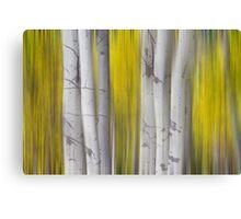 Colorful Autumn Aspen Tree Colonies Dreaming Canvas Print