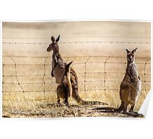At the fence Poster