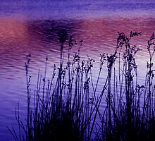 Reed sway by Louise Cooke